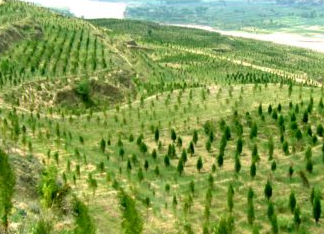 新一轮退耕还林 每亩退耕地补助1200元