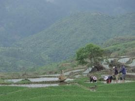 芒种:屏南南湾村插秧忙,今年全县计划种粮11.8万亩