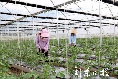 屏南:生态农业种植 助推乡村振兴