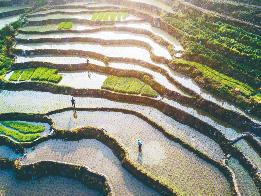柘荣宅中:千亩硒锌水稻完成插秧