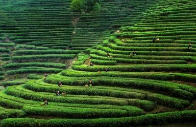 茶道休闲|用心做茶 助力脱贫