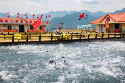 蕉城区水产企业:着力打造海上养殖设施升级改造样板工程