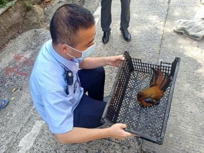 霞浦:救助国家三有保护动物红头咬鹃,并放归山林