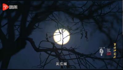 """【宁视频·纪录】一只""""国鱼""""的故事(5)——楝子花开,石首不来"""