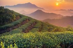福建日报 | 福鼎:农民钱袋子鼓了 村集体经济活了