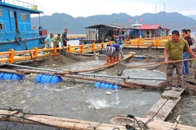 海上养殖综合整治后 养殖质量也随之提升