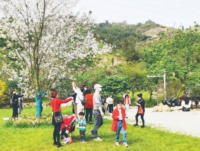 霞浦这个地方有个樱花谷,种有数十万株樱花,花一开,美爆了!