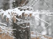 湿冷暴击,已刷新入冬最低温!明早这些地方会可能下雪……