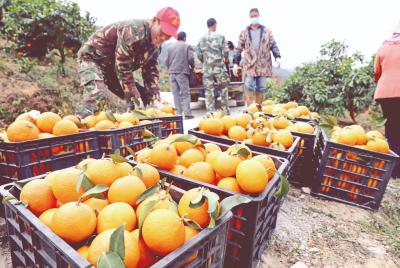 """福安:产业扶贫农户成了公司""""老板"""""""