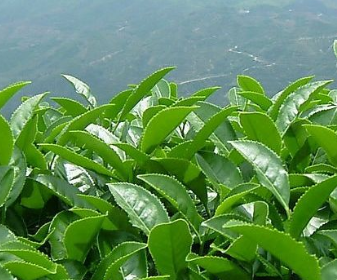 全市首个!5G农业智慧生态茶园有何不同?