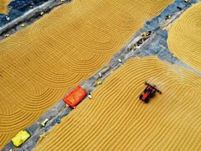 粮食生产再获丰收!2020全国粮食总产量13390亿斤