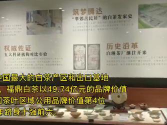 """回眸与展望丨福鼎白茶产业:茶树变身""""摇钱树""""助村民圆梦小康"""