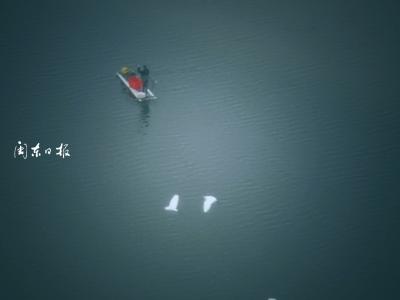 图讯丨今早,东湖万鹭齐翔