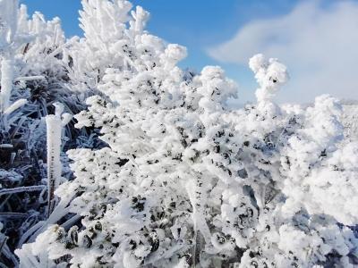 独家曝光!福安白云山传来一组冰雪景观,美了美了……