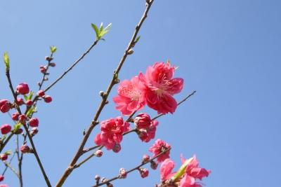 【宁德年味】春已至,约你到这个村赏古桥、流水、花世界....